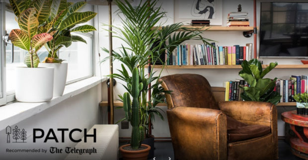 The Pull of Patch: A Genial Guide to Growing Things