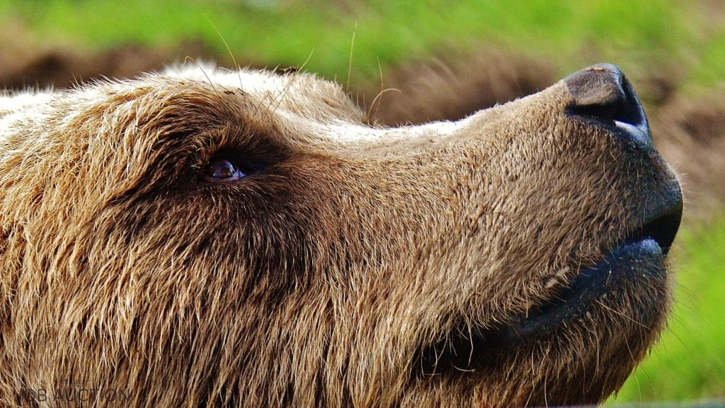 Newsflash: Republicans seek Amendment to Endangered Species Act